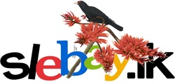 Slebay online store